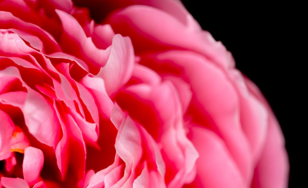significato fiori foulard arja cajo